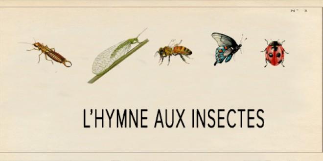 Sam 29 juin/L'HYMNE AUX INSECTES
